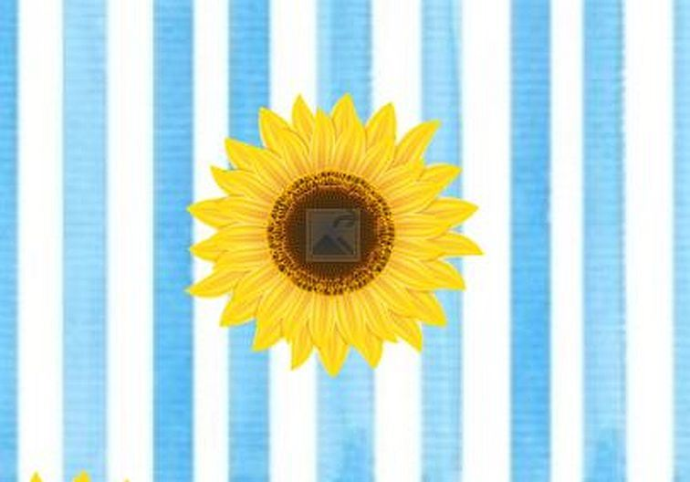 Single sunflower on a blue and white striped background
